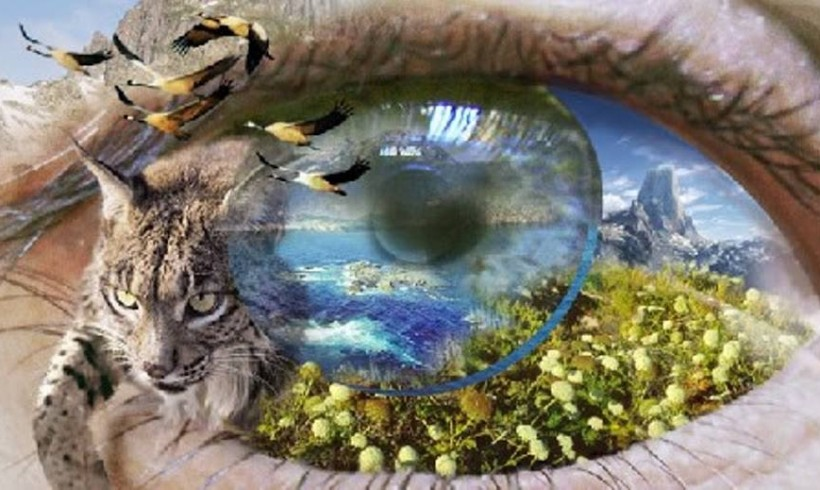 La conciencia de una sola tierra : Fascinación