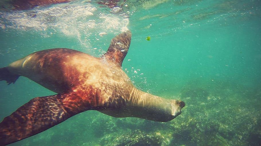 isla galapagos conocer ecuador