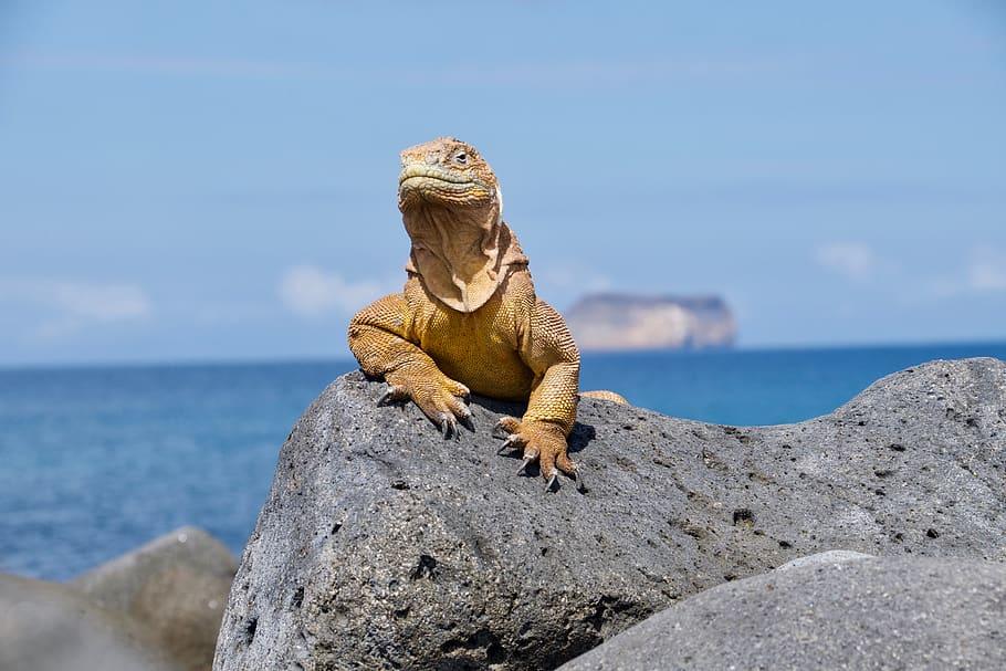 conocer islas galapago ecuador